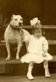 insurance for pit bull