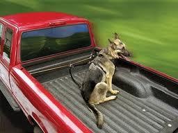 Dogs In Pickup Trucks
