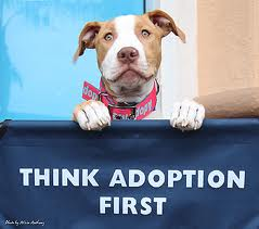 dog-rescue-pit-bull-rescue-insurance-501c3.jpg