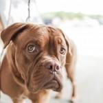 dog bites and children