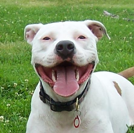 Dog Friendly Homeowners Insurance Companies