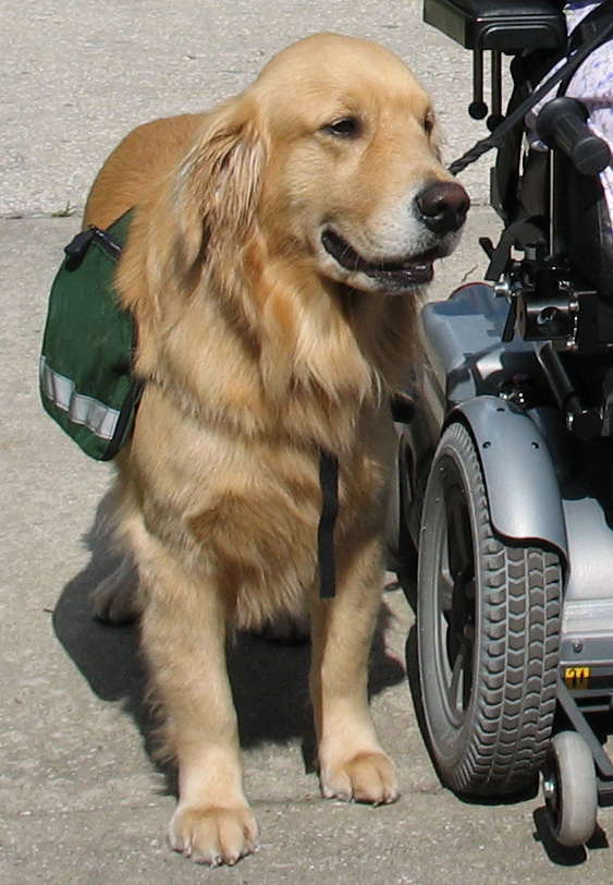 What Can A Service Dog Do For Depression