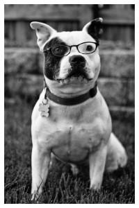 Florida Canine Liability Insurance