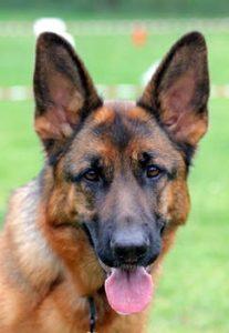 California Dog and Canine Liability Insurance