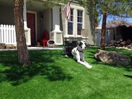 Home Insurance With a Dog Bite Claim in California
