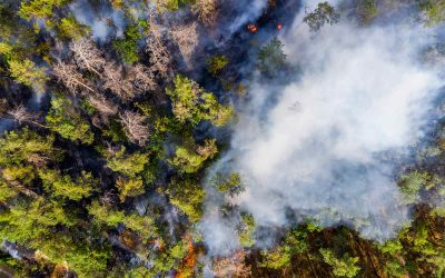 Wildfire and High Brush Home Insurance Policies Not Cancelling
